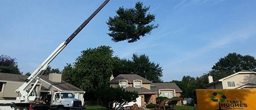Image result for Tree Service news